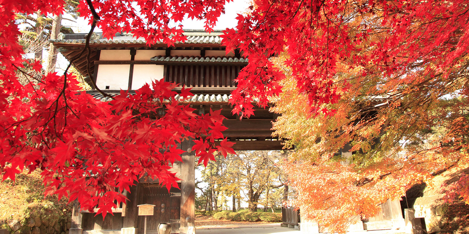 Hirosaki Castle Chrysanthemum and Autumn Foliage Festival