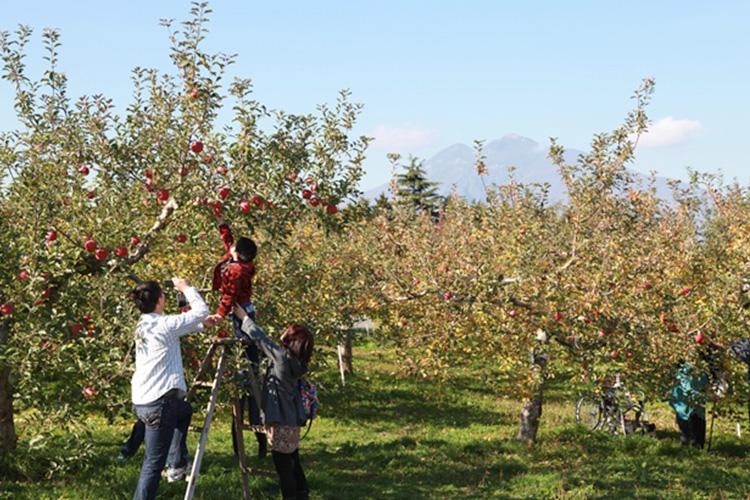 히로사키 사과 공원