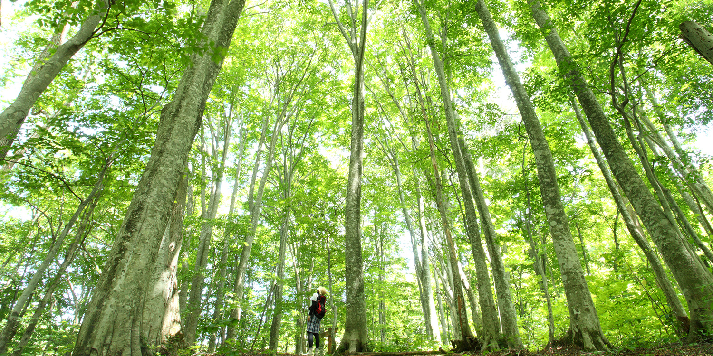 世界自然遺產白神山地