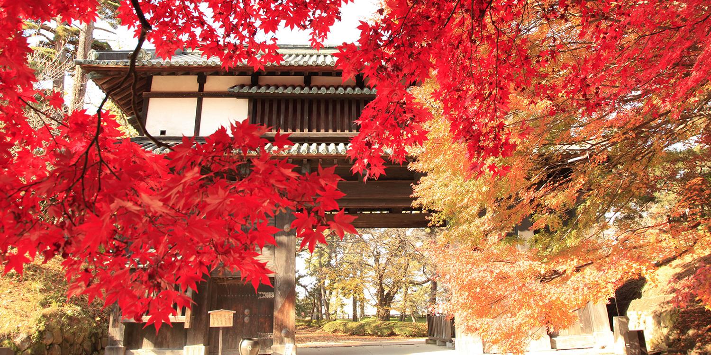 弘前城菊花與紅葉節