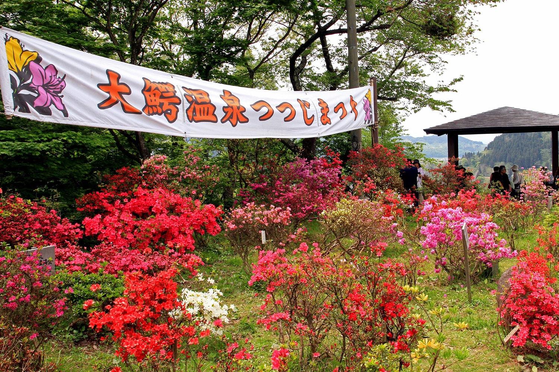 大鰐温泉つつじまつり(茶臼山公園)